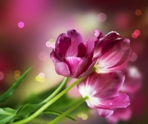 La timidité en poème illustrée par des fleurs